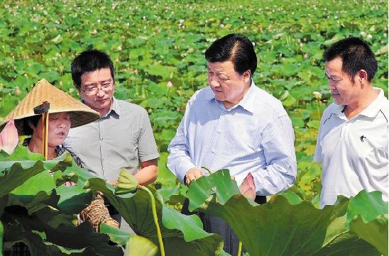 7月11日,刘云山在龙游县天池村田头与种莲农民交谈。