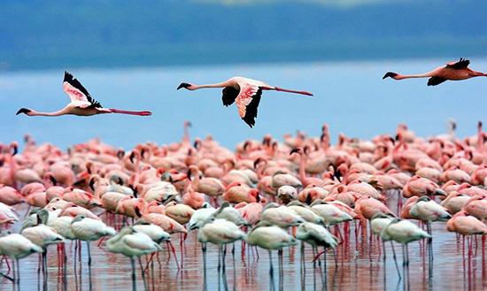 走进肯尼亚 动物大迁徙叹为观止(图)