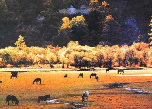 彩林和草原