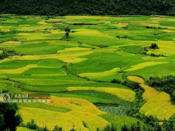 图为8月3日,融安县潭头乡岭背村的田园风光.