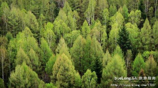 吉林长白山,纯天然森林氧吧