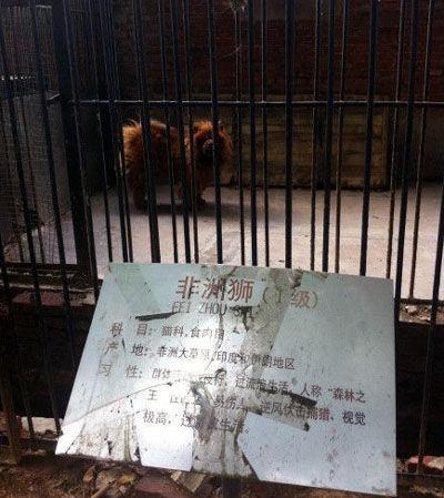 """河南动物园:藏獒冒充非洲狮 因""""汪汪""""叫被识破(图)"""