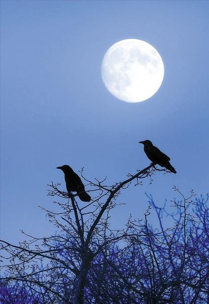 共享一轮明月