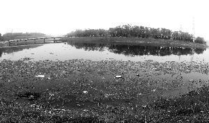 翠湖国家城市湿地公园。首席摄影记者 蔡代征/摄
