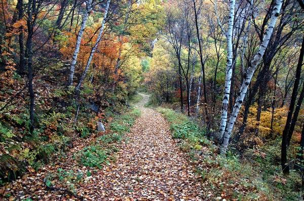 旅游台  旅游频道     原始森林风景区外有公路与怀丰公路联接,南通怀