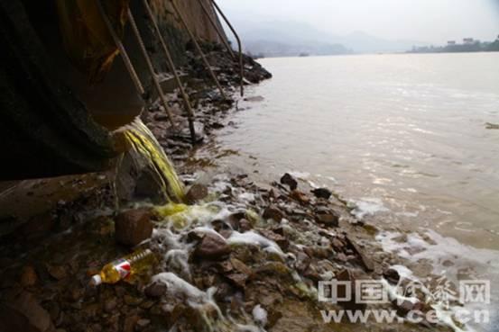浙江泰朗钢管污水排瓯江 一级保护动物栖息地遭污染
