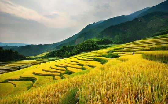 漳州:平和梯田风景美 引得游客如云来(图)