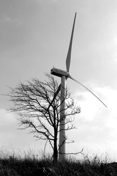 捕风发电忙