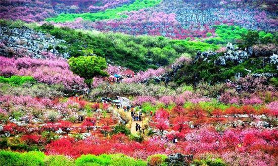 而桂林的三月,也正是被鲜花闹醒的春天,各式各样的鲜花争奇斗艳,桃花