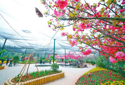 Tens Of Thousands Butterflies Have Travelled There All The Way From Yunnan Province To Chinas