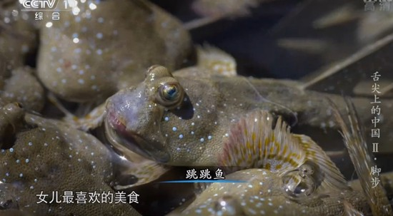 浙江三门湾 跳跳鱼