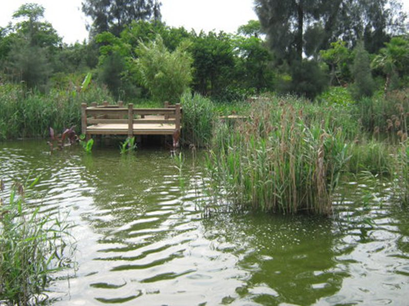 游人可以坐在水榭的观景阳台上远看五桥如环相映,可以漫步在木栈道上看湖上芦苇飘摇、睡莲盛开,可以在湖心鸟岛上看水岛在氤氲雾气中起落飞翔,可以在木栈平台上享受垂钓的乐趣。   知道吗?我的家就在美丽的湿地公园附近。亲爱的朋友们,有空到湿地公园游玩吧!