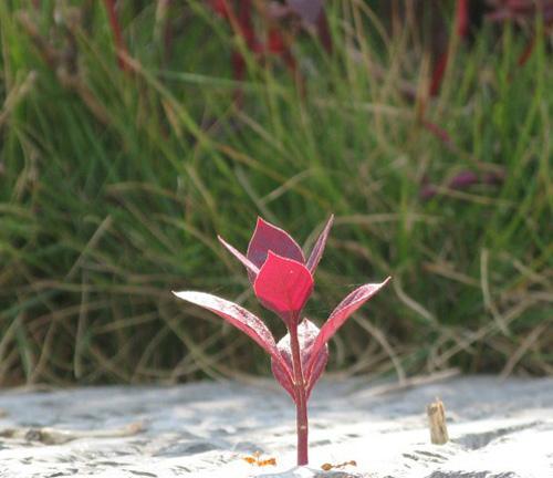 为梦坚强,石缝中清傲而活。