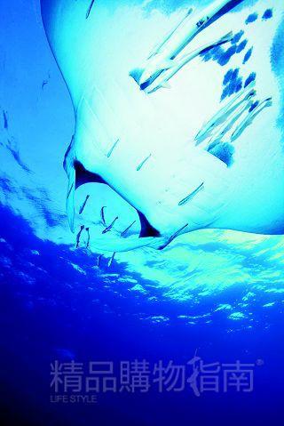卡通海底相机图片素材