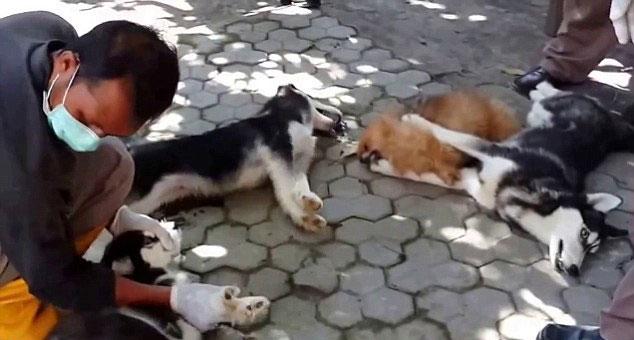 狗狗食品_