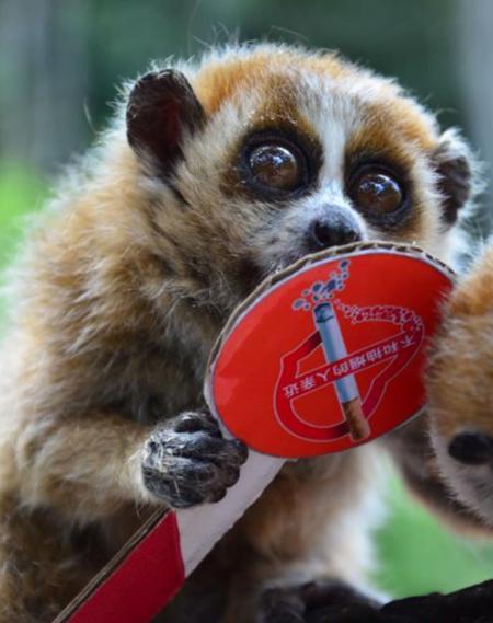 这些动物包括国家一级保护濒危动物白颊长臂猿