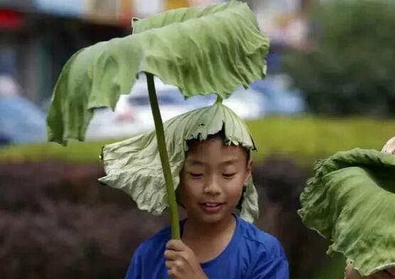 会形容炎热的天气为骄阳似火,火伞高张,夏天的景色则是万木葱茏,鸟语
