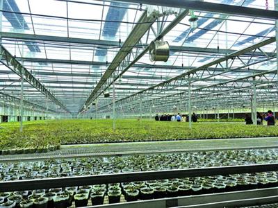 位于集美的塔斯曼产业基地智能培育中心。