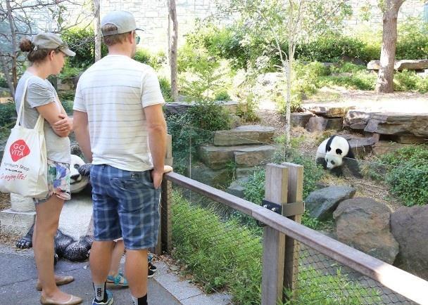 游客观赏大熊猫,图源:中新社
