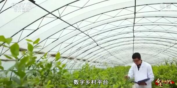 【奋进新时代】扶持特色产业发展 打好精准脱贫攻坚战