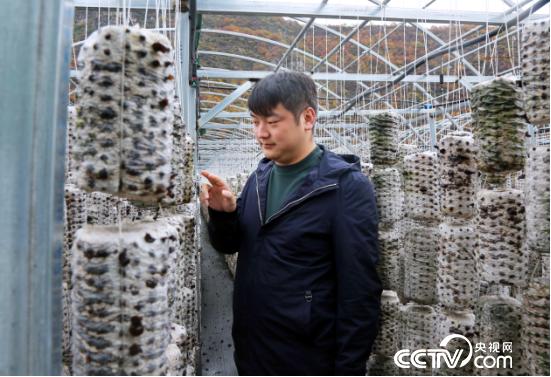 回到家乡的张国栋引进了最新的木耳种植技术。(记者 王莉莉 摄)