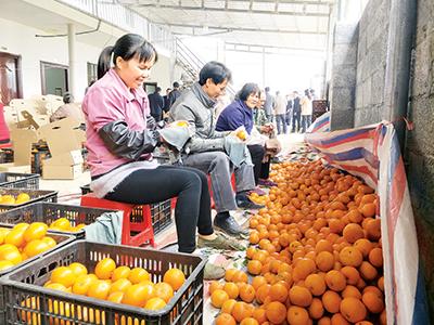 """广西百色县采取""""支部+公司+基地+农户""""模式,引导群众流转土地,规模发展特色水果产业,实现脱贫增收。"""