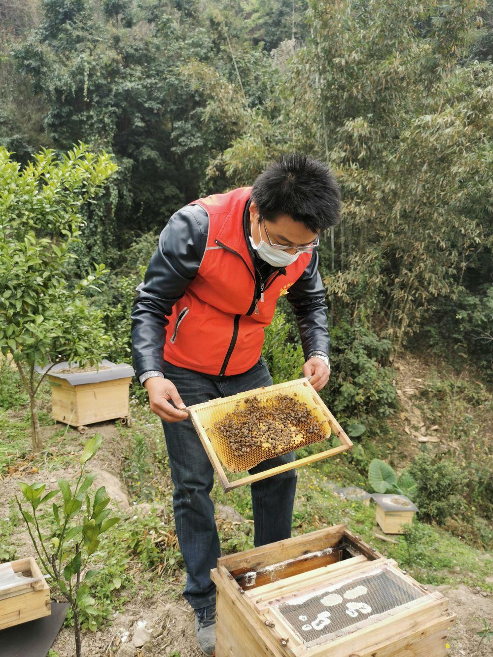 广西乐业县百坭村第一书记杨杰兴查看村里养殖的蜜蜂(2月26日摄)。新华社记者 王念 摄