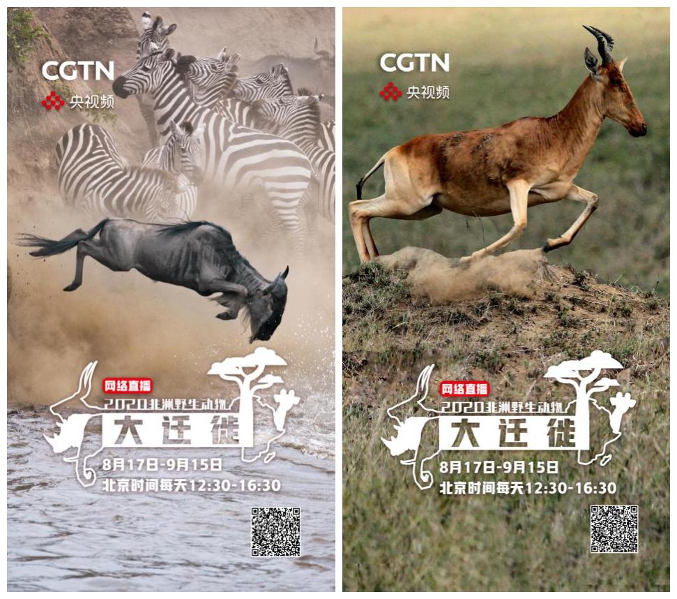 """探索狂野非洲,见证生命奇观!央视频云端直播""""非洲野生动物"""