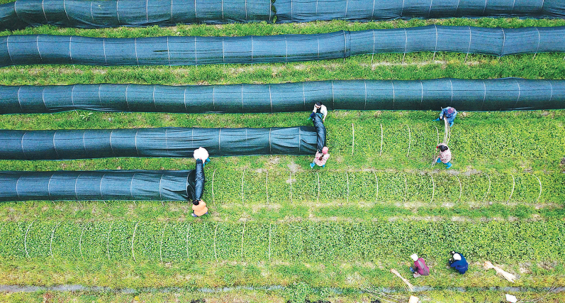 """贵州榕江县积极引导村民调整产业结构,以""""党支部+合作社+基地+农户""""模式发展育苗产业,实现村民多元化增收。"""