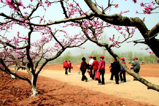 肥城桃花节时间至