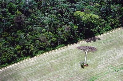 亚马逊森林砍伐
