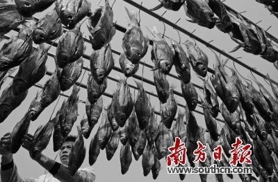 顺德美食要向成都美食学点啥?福田区深圳市美食街图片