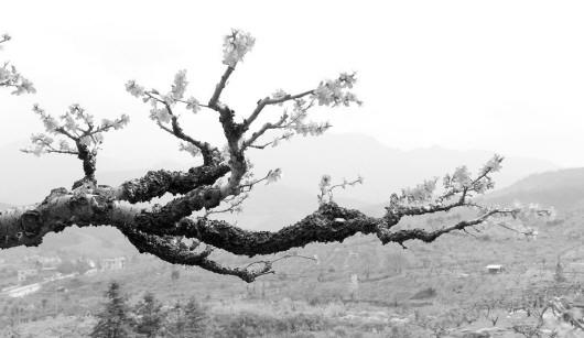 蔓延树枝简笔画