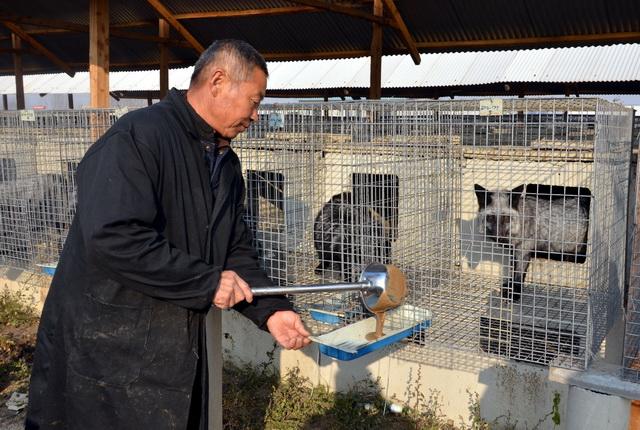 河北省昌黎縣一家貉、貂養殖場。攝影/章軻