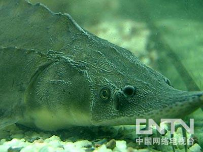 潜入海蛇基地消灭鱼王