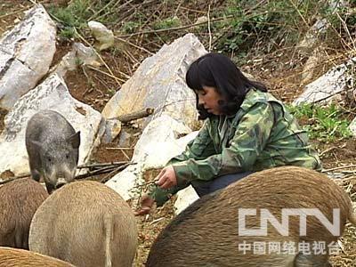 湖南桑植杜菊英:野猪成灾后的财富发现