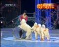 动物精彩表演