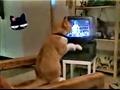 搞笑猫咪视频集锦