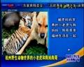 杭州野生动物世界的小老虎和狗妈狗哥