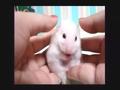吓呆掉的小白鼠 完整版