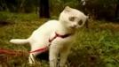 表情极为戏剧化的搞笑猫咪