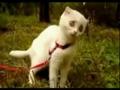 学狗叫猫咪