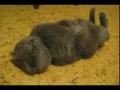 搞笑动物!见过这样睡觉的猫猫吗