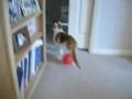 可爱小猫与气球(静电