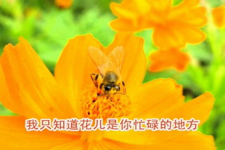 小蜜蜂(赵天鸽)
