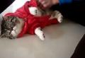 有没有见过这么有原则的猫,一穿衣服直接僵硬