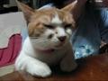 爆笑猫咪主人教猫学狗叫