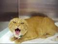 猫很生气 - 滑稽