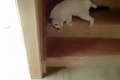 可爱小猫爆笑下楼方式
