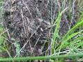 请您欣赏  疯狂的蚂蚁抢卵